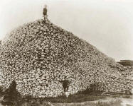 Mountain of Indian Skulls